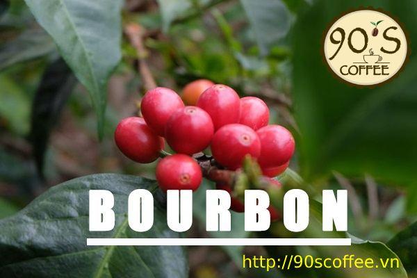 cafe bourbon la giong co gia tri hat tai viet nam