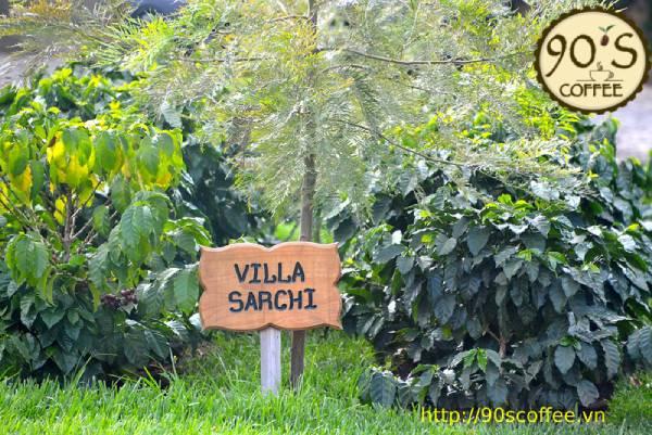 cac giong villa sarchi co hinh dang thap lun